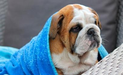 Descubra se os cães sentem frio ou não