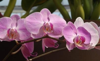 Aparecida de Goiânia recebe Exposição de Orquídeas e Flores do Deserto com mais de 20 mil espécies e entrada gratuita