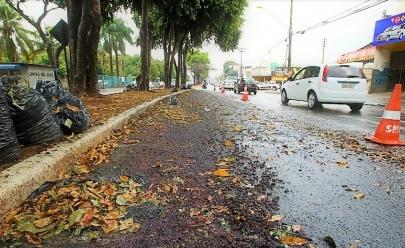 Temporada de Jamelões atrapalham trânsito de Goiânia