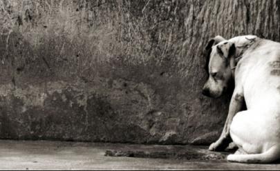 Pet shops podem ser obrigados a denunciar casos de maus-tratos contra animais em Goiás
