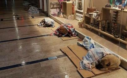 Shopping abre as portas para abrigar cachorros abandonados do frio e das ruas