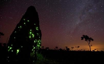 Bioluminescência: o incrível e raríssimo fenômeno que só acontece em Goiás