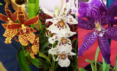 Uma série de fotos com as mais belas flores da IX Exposição de Orquídeas e Flor do Deserto