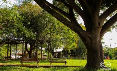 Bosque Bougainville promove experiência sensorial com espécies nativas do cerrado, canto de pássaros, temperatura amena e espaços contemplativos em Goiânia