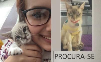 Jovem denuncia crime de assassinato de gatos em condomínio de Goiânia e se torna alvo de processo