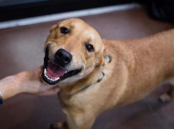 ONGs de proteção animal promovem Arraial Solidário em Uberlândia