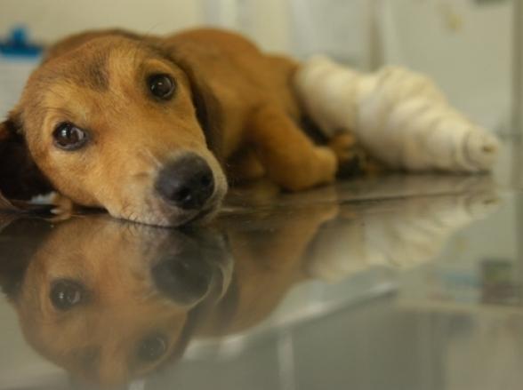 Maltratar ou abandonar animais agora dá R$ 3 mil de multa em Minas Gerais