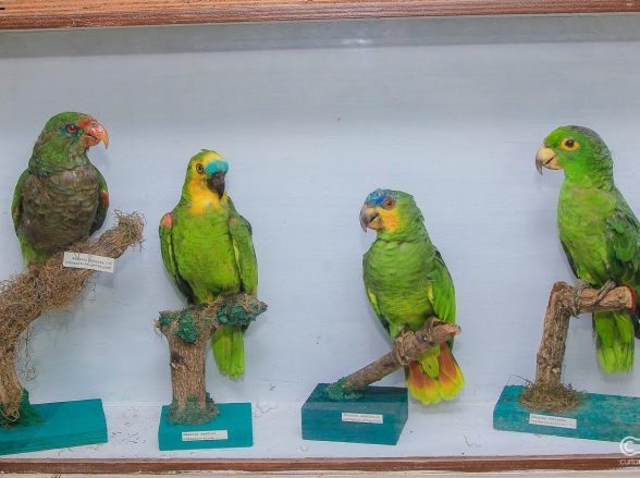 O maior Museu de Ornitologia do mundo fica em Goiânia; conheça