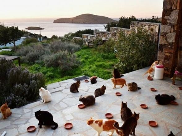 Moradora de ilha paradisíaca oferece emprego dos sonhos: cuidar de mais de 50 gatos