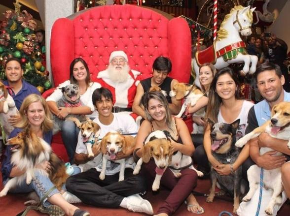Shopping de Brasília promove primeira edição gratuita de evento natalino para animais